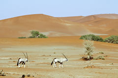 Wandering dune of Sossuvlei in Namibia Stock Photo