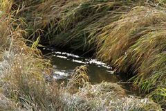 Wandering flowing creek bed Stock Photos