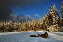 Wanderland del invierno Foto de archivo libre de regalías