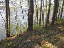 Wanderlust: смешанные лес и река Berezina, весенний сезон в Беларуси стоковое изображение rf