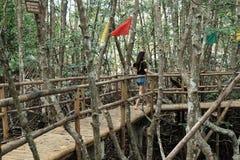 Wanderlust. Mangrove in Puerto Gallera Royalty Free Stock Photos
