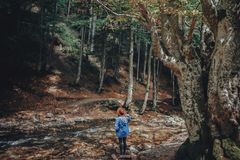 Wanderlust and travel concept. stylish traveler girl in hat expl. Oring woods. hipster woman travelling in the forest, walking at river. space for text Stock Photo