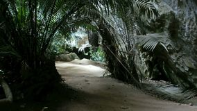 Wandern das Waldprimitive, lacation Naben-PA-tad, Uthai Thani stock video