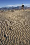 Wandern in den Death- Valleydünen Stockfotografie