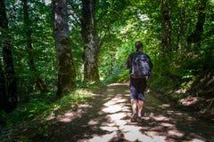 Wandern in den reinen Wäldern von Montenegro Stockbilder