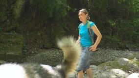 Wandern der Schönheit mit dem Rucksack, der Foto durch Smartphone auf Bank von Gebirgsfluss mit Malamutehund im Dschungel macht stock footage