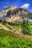 Wandern des Alpenschneehuhns Cirque Lizenzfreies Stockbild