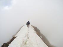Wandern des Ausflugs über dem Schneebige Nock in den österreichischen Alpen Lizenzfreie Stockbilder