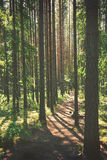 Wandern des Pfades Stockbild