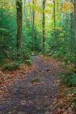 Wandern des Pfades durch das Holz Lizenzfreie Stockfotografie
