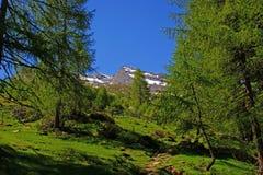 Wandern durch den Gebirgswald Lizenzfreie Stockfotografie
