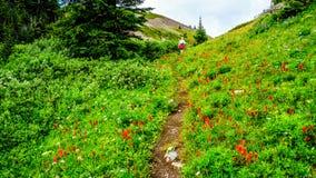 Wandern durch die hohen Alpenwiesen bedeckt in den wilden Blumen zur Spitze von Tod Mountain Lizenzfreies Stockfoto