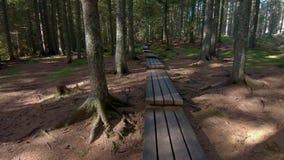 Wandern durch Holz auf Steg stock video