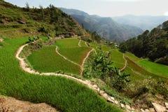 Wandern durch Reisterrassen Stockfotografie