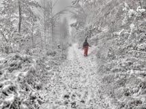 Wandern in einem Schnee-Sturm Stockfotografie
