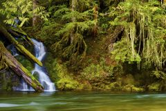 Wandern entlang Salmon River Mt Hood National Forest Stockfotos