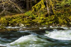 Wandern entlang Salmon River Mt Hood National Forest Lizenzfreie Stockfotos