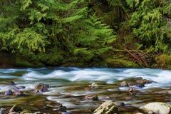 Wandern entlang Salmon River Mt Hood National Forest lizenzfreies stockbild