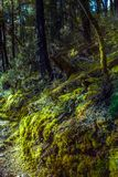 Wandern im Busch Lizenzfreie Stockbilder