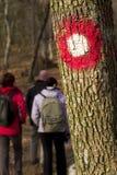 Wandern im Holz Stockfotografie