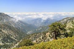 Wandern im Mt Baldy-Spur lizenzfreie stockbilder