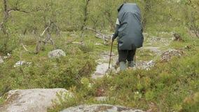 Wandern im norwegischen Wald stock footage
