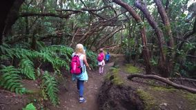 Wandern im Wald stock footage