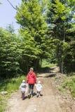 Wandern im Wald Stockfoto