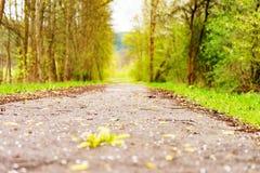 Wandern im Wald Lizenzfreies Stockbild