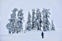 Wandern im Winterwald nach schweren Schneefällen Stockbild