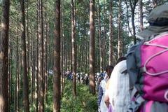 Wandern in Japan Stockfotos