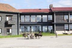 Wandern in Lappland Lizenzfreie Stockbilder