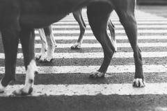 Wandern mit Hunden lizenzfreie stockfotos