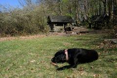 Wandern mit unserem Hund Lizenzfreie Stockbilder