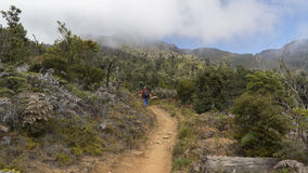Wandern an Nationalpark Chirripo Stockbilder