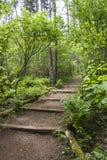 Wandern oder Gehweg mit Schritten Lizenzfreies Stockbild