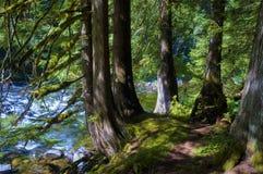 Wandern von dem Mount Rainier auf der Spur Nisqually Vista Hood National Forest Salmon River stockfoto