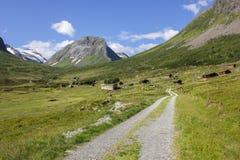 Wandern von Geirangerfjorden in Norwegen Lizenzfreie Stockbilder