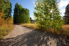 Wandernde/radfahrende Straße durch Wald und Wiesen lizenzfreies stockbild