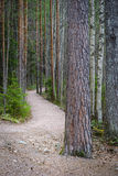 Wandernde Spur Stockbild