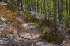 Wandernde Spur Stockbilder