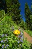 Wandernde Spur in den Bergen Stockbild