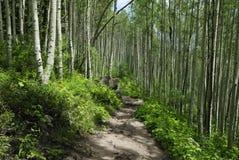 Wandernde Spur in den Kolorado-felsigen Bergen lizenzfreie stockfotos