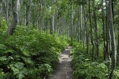 Wandernde Spur in den Kolorado-felsigen Bergen Stockbilder