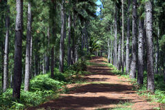 Wandernde Spur in den Tropen Lizenzfreies Stockbild