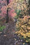 Wandernde Spur führt durch Kabinendach der Ahornholzbäume im Falllaub stockfotografie