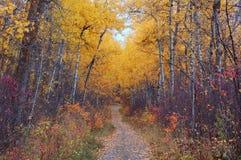 Wandernde Spur im Herbstwald Lizenzfreies Stockbild