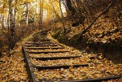 Wandernde Spur im Herbstwald Lizenzfreie Stockbilder