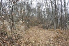 Wandernde Spur im Wald lizenzfreies stockbild