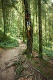 Wandernde Spur im Wald Stockfoto